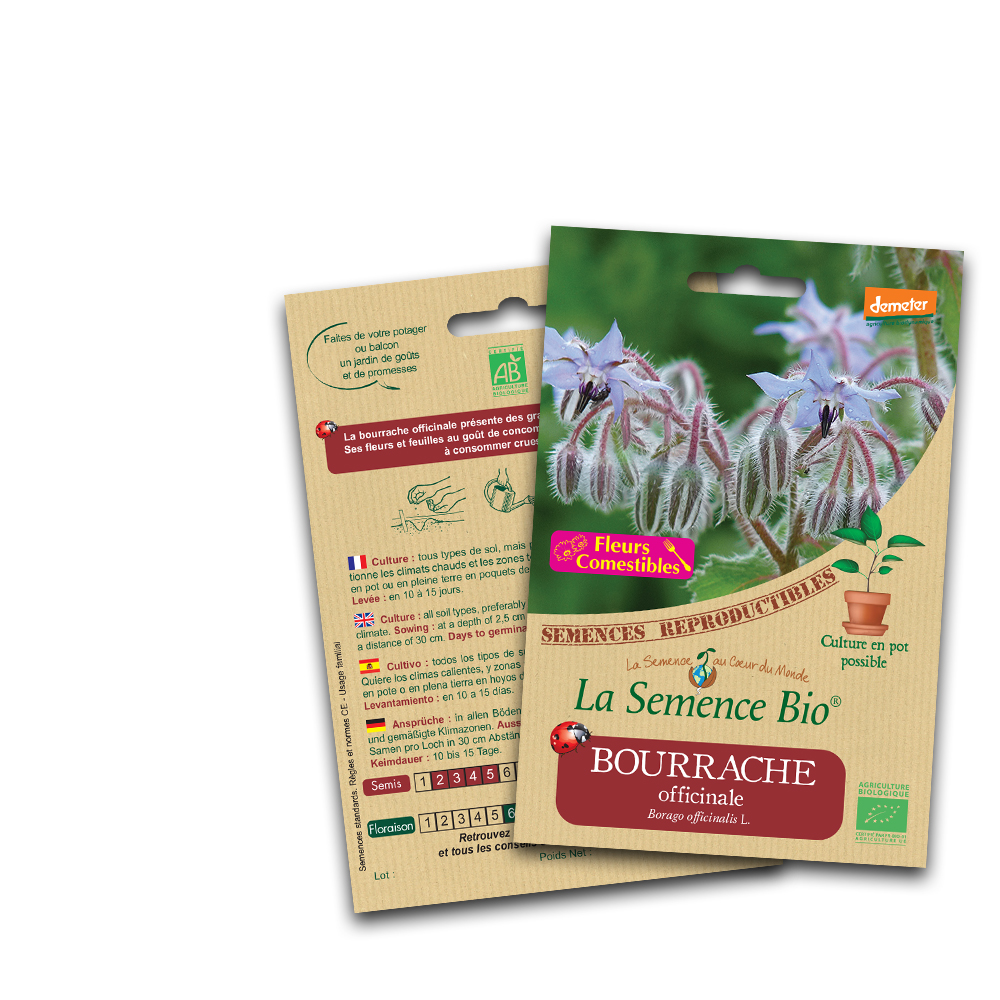 Bourrache officinale bio