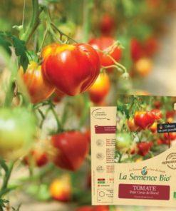 Tomate petit coeur de boeuf bio