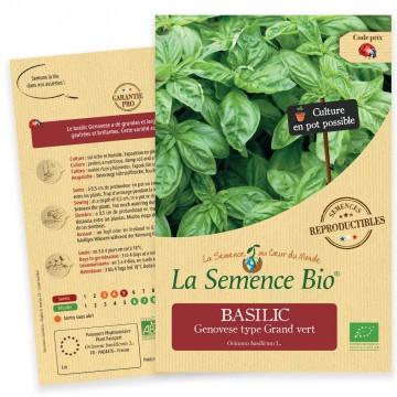 Basilic Genovese bio