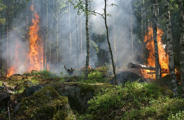 Que faire pour nos forêts qui brulent ?