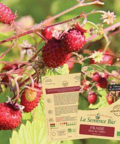 fraises des bois bio