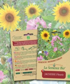 jachère fleurie bio