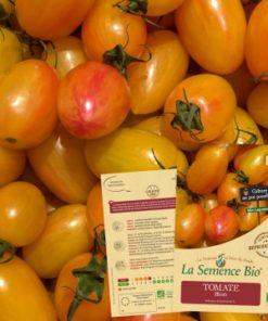 tomate blush bio